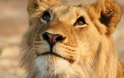 apasionado africano morena cerca de León