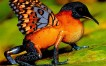 30 excelentes manipulaciones de fotografías de animales