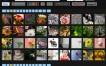TagBulb, metabuscador de fotografías y videos