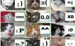 Los emoticones más comunes representados por gatos