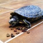 Curiosidades – ¿Es peligroso comer alimentos que cayeron al suelo?