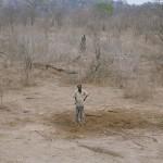 ¿En cuánto tiempo se pueden terminar 6 toneladas de elefante?