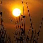 SUN-ANIMALS-11