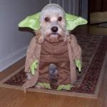 Feliz día de Star Wars, te desea PuntoGeek.com