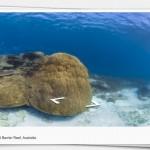Da un paseo por la Gran Barrera de Coral gracias a Street View