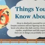 Algunas cosas interesantes que no sabías sobre el sueño