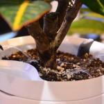 Las macetas inteligentes que riegan solas a las plantas